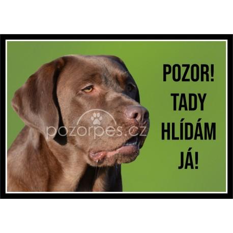 Labradorský retrívr hnědý