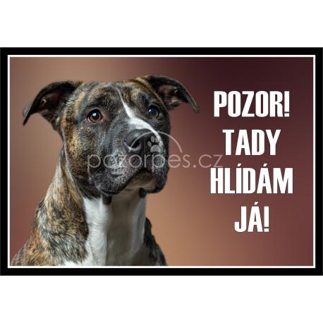 Tabulka Americký pitbulteriér (pitbull) - hliník
