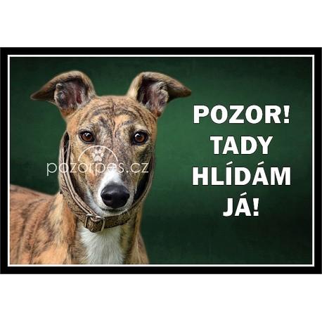 Greyhound - anglický chrt - hliník