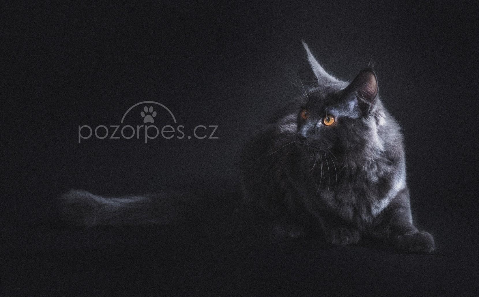Velké ošklivé kočička fotky